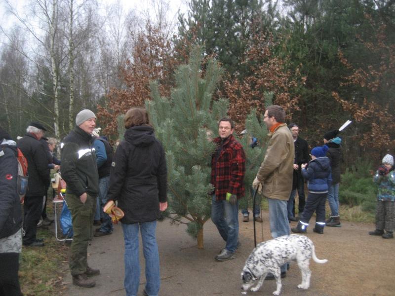 Weihnachtsbaum 2014 mit Kiso und Hund (2)