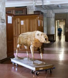 Wildschweinpraeparat ©HGoetz-MfN