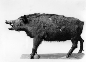 Bestand: Zool. Mus., Signatur: B III/1503